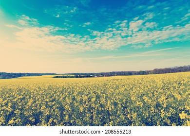 Nashville Retro Photo Filter Effect - Oil Seed Rape Fields in early morning light