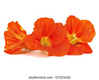 Nasturtium or Indian cress flower on a white background