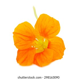 Nasturtium Orange flower isolated on a white background
