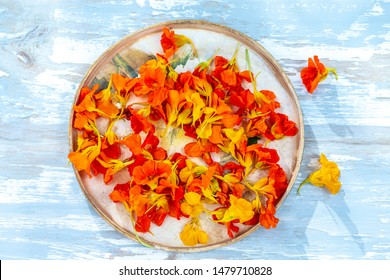 Nasturtiums Flower edible Colorful in wooden tray on old paint blue background