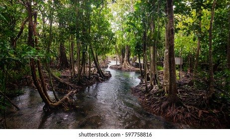 National conservative mangrove forest, Krabi, Thailand.