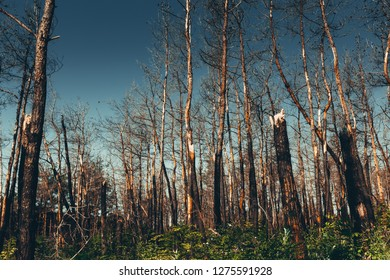 National Environmental problems, environmental pollution, dead forest, harmful production, barbaric deforestation, the threat to the existence of life concept
