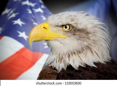 national flag of usa and a bald eagle