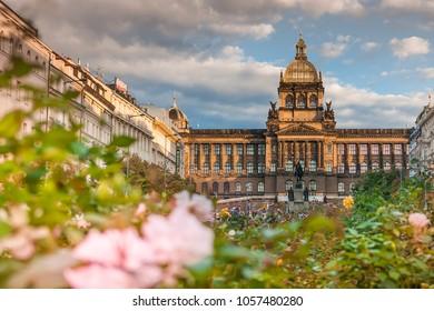 National Museum historic building in Prague, on famous Wenceslas Square (Muzeum, Vaclavske namesti) lit by autumn evening light, blurred rose bushes foreground. PRAHA, CZECH REPUBLIC - SEPT 19, 2015