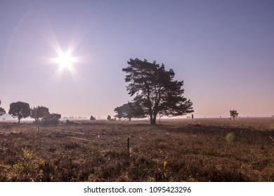 National nature park De Maashorst in netherland