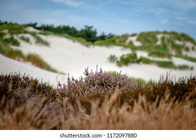 National nature park with dune landscape on the Dutch coast. Landscape with sand dunes, dune grass, heath, forests, pine trees and mosses