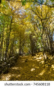 National Park of Abruzzo, Lazio and Molise (Italy) - The autumn foliage in the italian mountain natural reserve, with little old towns, the Barrea Lake, Camosciara, Forca d'Acero, Val Fondillo