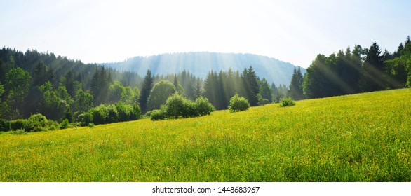 National park Bayerische Wald,Germany. Spring landscape at sunrise.