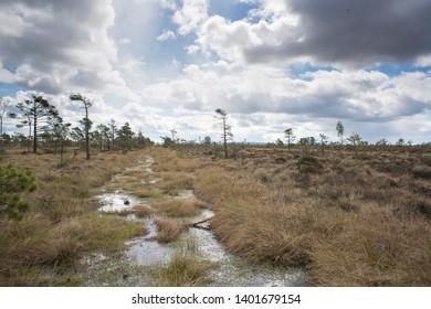 National park bog and marshland dramatic landscape - Store Mosse National Park in Smaland Sweden - Must visit traveling in Sweden.