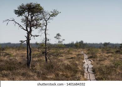 National park bog and marshland dramatic landscape hiking trail on footbridge - Store Mosse National Park in Smaland Sweden - Must visit traveling in Sweden.