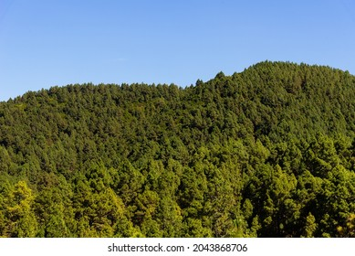 National Park of Caldera de Taburiente from Llano del Jable Astronomical Viewpoint. Volcanic landscape with Canarian Pine Trees Forest, Pinus canariensis. La Palma, Canary Islands. Volcano of San Juan