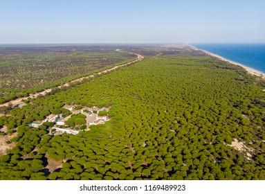 National Park of Donana, near Mazagon, Huelva, Andalusia, Spain