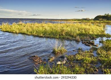NATIONAL PARK ESTEROS DEL IBERA, CORRIENTES, ARGENTINA - NOV 25, 2014: Wetlands in Nature Reserve Esteros del Ibera, Colonia Carlos Pellegrini, Corrientes, Argentina.