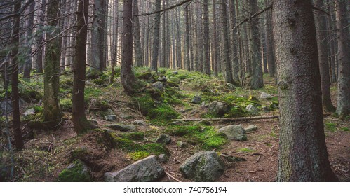 National park High Tatras forest in autumn.