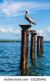 National park Los Haitises Dominican Republic