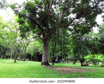 a national park is a nice place  to visit and stay for a long holiday ,it is fresh and green environment with big trees in rain forest.Beautiful landscape as background