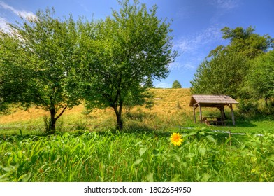 National park Risnjak, Croatia, trees and meadow with sunflower, on a sunny day