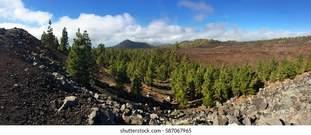 National Park Teide. Hiking on Tenerife. Known for its unique nature and contrasting landscapes.