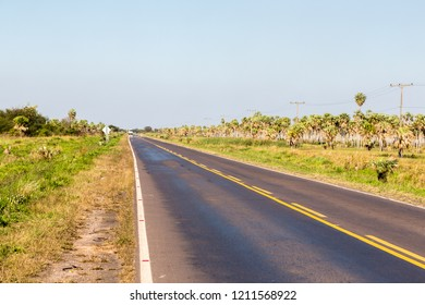 891264c8752e National Route 9 highway runs through a palm forest and grasses of Paraguayan  Chaco savannah