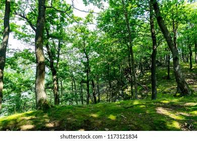 Nationalpark Eifel Achen in Germany - The forrest area at the Eifel Nationalpark