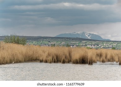 Nationalpark Neusiedler See – Seewinkel with with the mountain Schneeberg behind, Austria, Burgenland