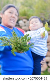 Native american family holding medical peruvian plant called  tipollo.