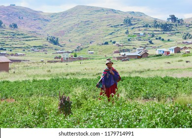 Native american old woman wearing typical aymara clothes stands on the potato field.