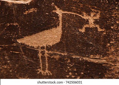 native american petroglyphs depict a road runner and a lizard