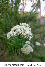 Native Australian botanical plant blooms in the wild