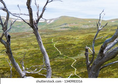 Native Australian forest vegetation in Kosciuszko National Park, NSW, Australia. Nature background with plants and vegetation.