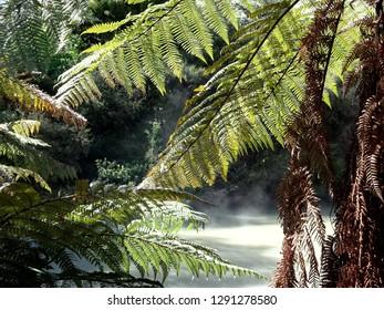 Native ferns framing a hot pool at Rotorua New Zealand