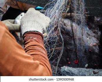 Native fisherman wear gloves is release fish from trawl net at Koh Yao Yai island , Thailand
