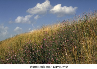 Native grasses and wildflowers on an Ozarks' hillside with a blue sky and clouds backdrop make a scenic view of a common sight in Lawrence County, Missouri.
