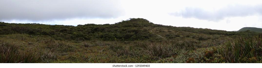 A native landscape in Molokai