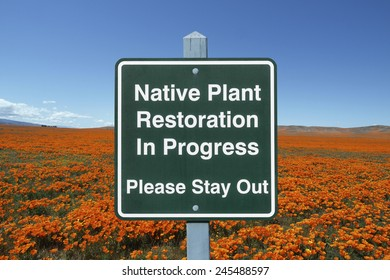 Native plant restoration sign with California poppy field.