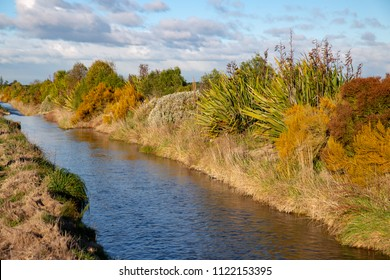 Native plantings along the riparian zone of a waterway