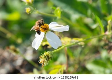 Native Plants Bugs Florida