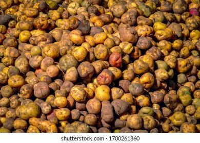 Patatas nativas en el mercado