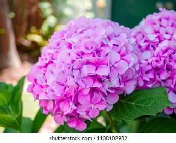Natual flower