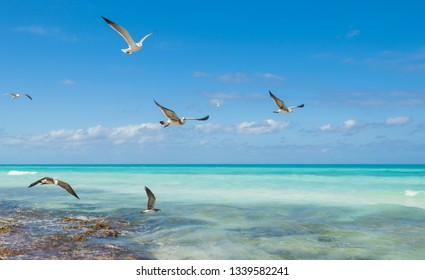 Natur background with seagulls flying above a sea. White seagulls over blue sky background.