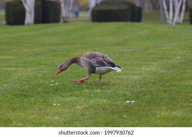 Natur fotografie. Tiere himmel Lost place  - Shutterstock ID 1997930762