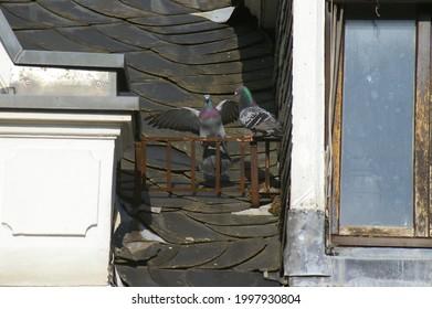 Natur fotografie. Tiere himmel Lost place  - Shutterstock ID 1997930804