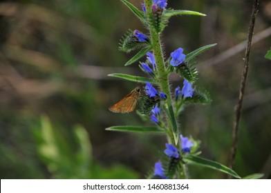 natura primavara cu flori si fluturi