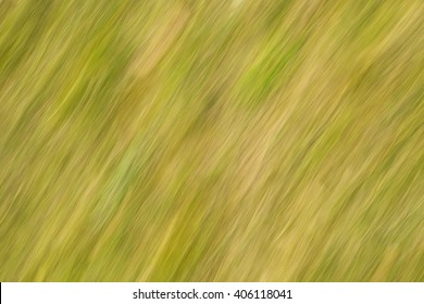 Natural abstract background with curved lines