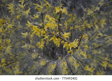 Natural abstract background, leaves, tree