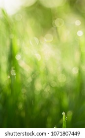 Natural abstract soft green defocused sunny background with grass and light spots. Spring easter backdrop with copy space