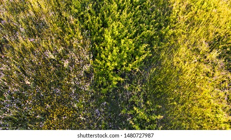 Natural aerial abstract surface background top view of uncultivated meadow with colorful flowers, foliage plants and shrubs