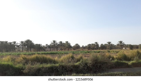 A natural agricultural area in Karbala, Iraq