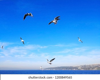 Natural and animal concept. Many seagulls are flying happily in the blue sky while searching for prey over the deep blue sea. Background, Selective focus and copy space.