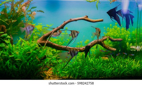 picture regarding Aquarium Backgrounds Printable called Aquarium History Photographs, Inventory Illustrations or photos Vectors